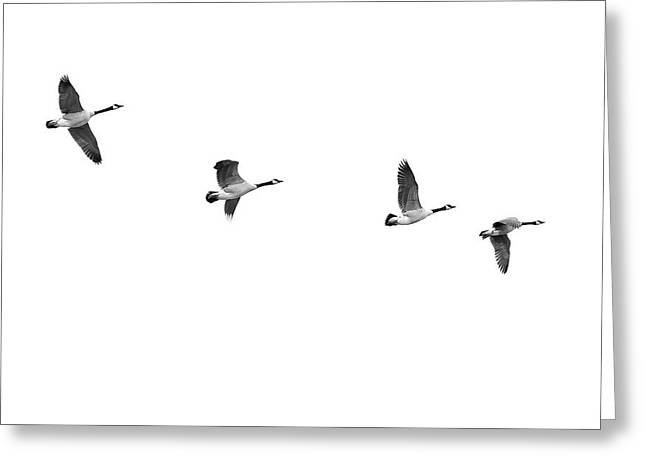 Geese In Flight Greeting Card