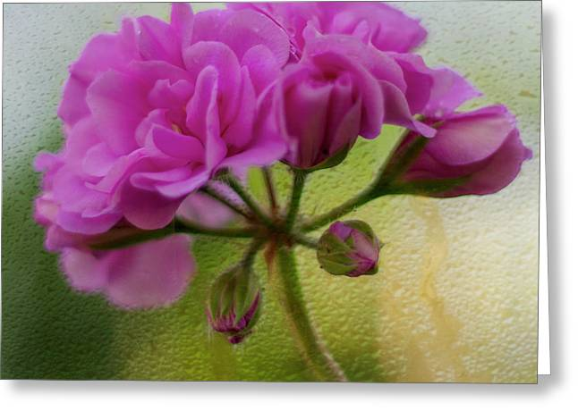 Geranium Rain  Greeting Card