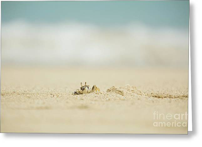 Greeting Card featuring the photograph Ghost Crab Digging Into Sand - Hawaii by Charmian Vistaunet