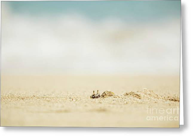 Greeting Card featuring the photograph Ghost Crab Emerging From Hole In Sand by Charmian Vistaunet