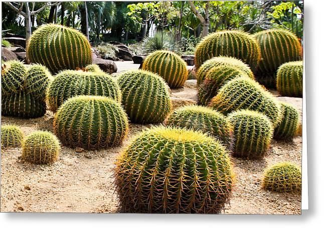 Giant Cactus In Garden, Thailand Greeting Card