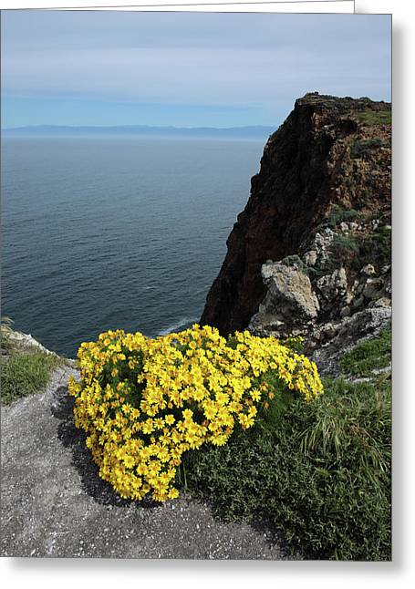 Giant Coreopsis Greeting Card by Robin Street-Morris