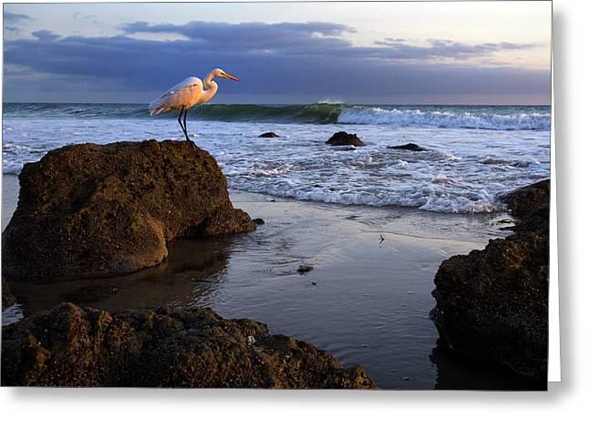 Giant Egret Greeting Card