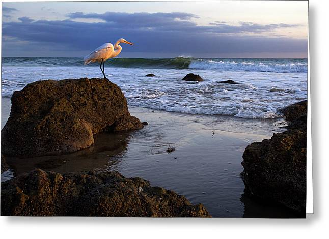 Giant Egret Greeting Card