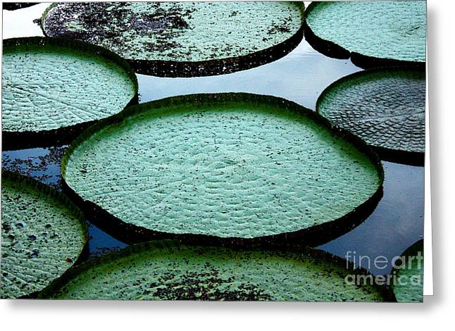Giant Lily Pads In The Amazon Greeting Card