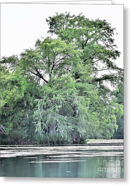 Giant River Tree Greeting Card