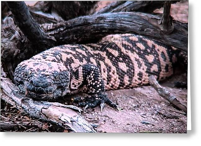 Gila Monster Under Creosote Bush Greeting Card
