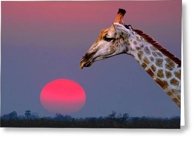 Giraffe Composite Greeting Card