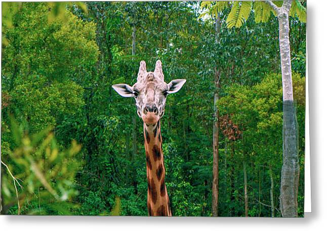Giraffe Looking For Food During The Daytime. Greeting Card