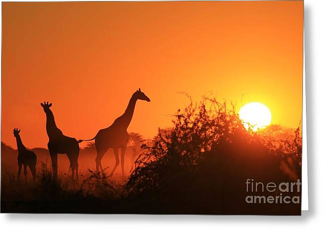 Giraffe Silhouette - African Wildlife Greeting Card