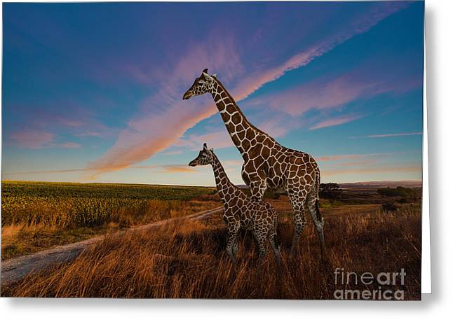 Giraffes And The Landscape Greeting Card