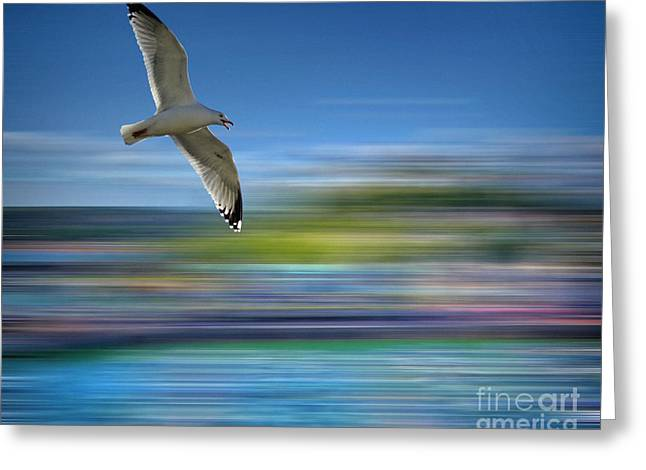 Greeting Card featuring the photograph Gull Flight #192 by Edmund Nagele