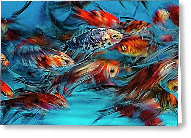 Gold Fish Abstract Greeting Card