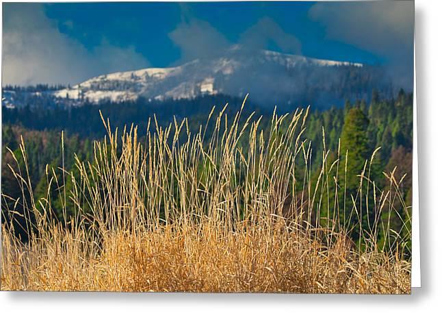 Gold Grass Snowy Peak Greeting Card