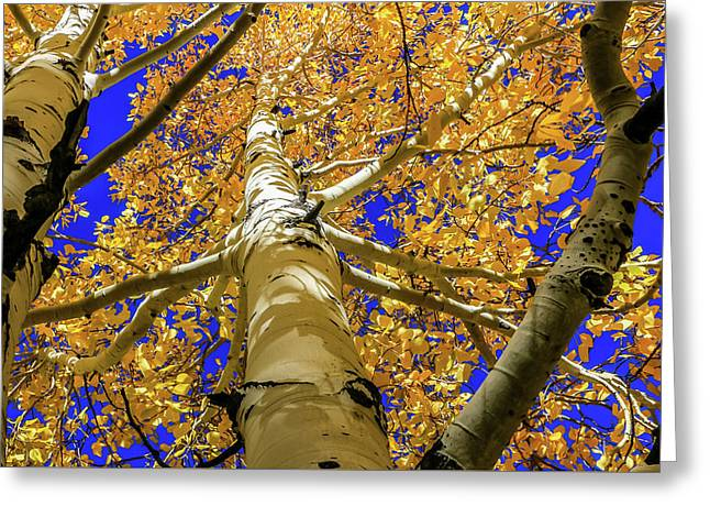 Golden Aspens In Grand Canyon Greeting Card