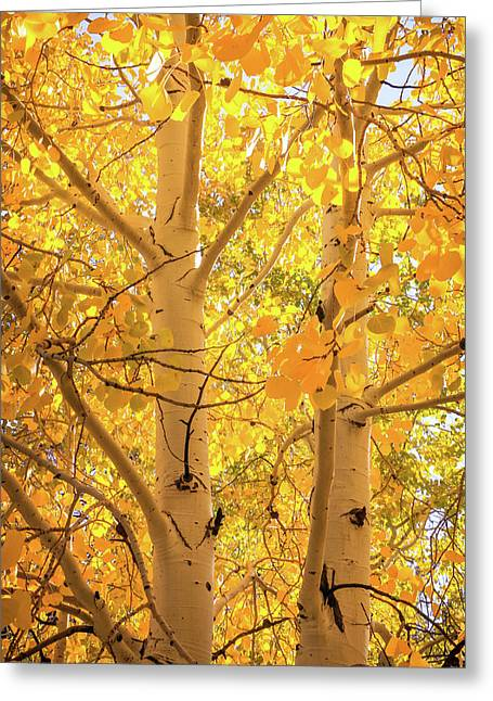 Golden Aspens In Grand Canyon, Vertical Greeting Card
