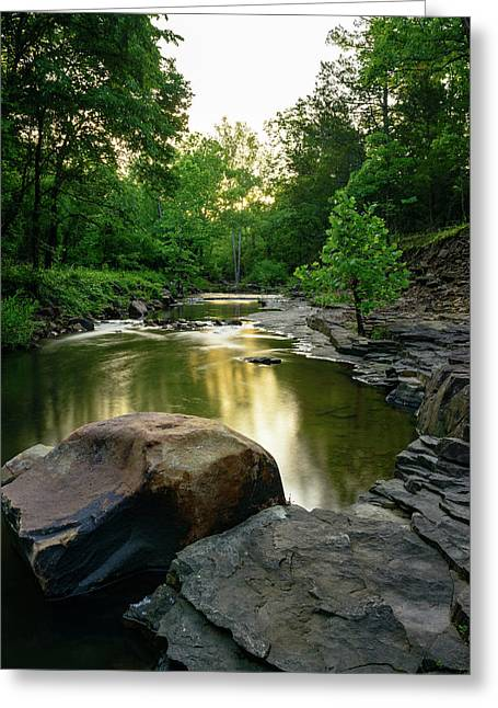 Golden Creek Greeting Card