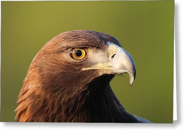 Golden Eagle 5151801 Greeting Card