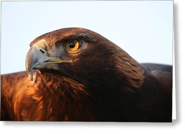 Greeting Card featuring the photograph Golden Eagle 5151803 by Rick Veldman