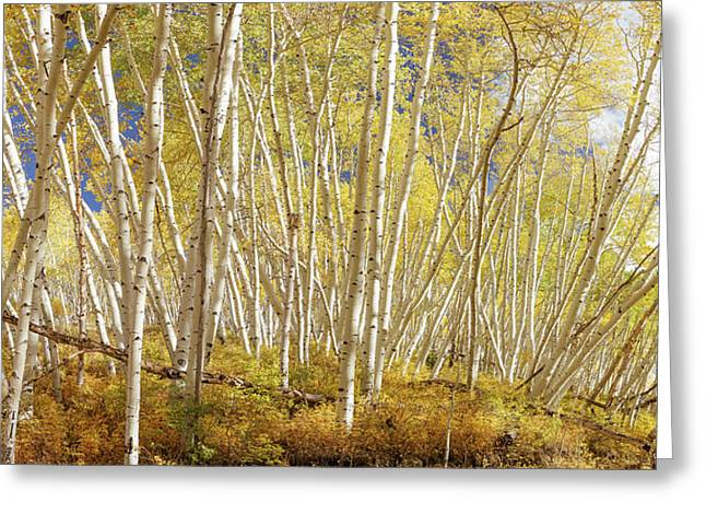 Greeting Card featuring the photograph Golden Forest Fantasy by James BO Insogna