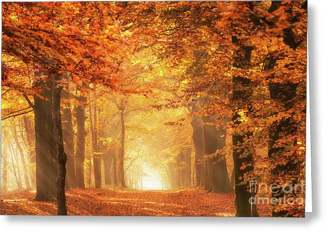 Greeting Card featuring the photograph Golden Forest In Fall Season by IPics Photography