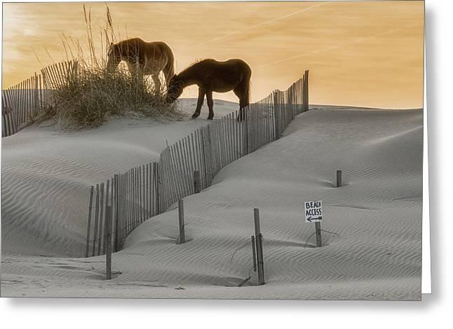 Golden Horses Greeting Card