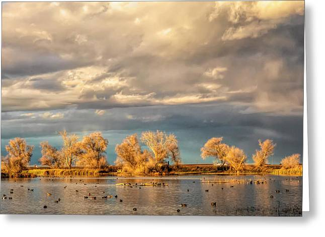 Golden Hour In The Refuge Greeting Card
