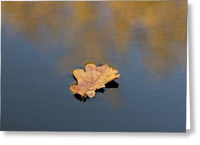 Golden Leaf On Water Greeting Card
