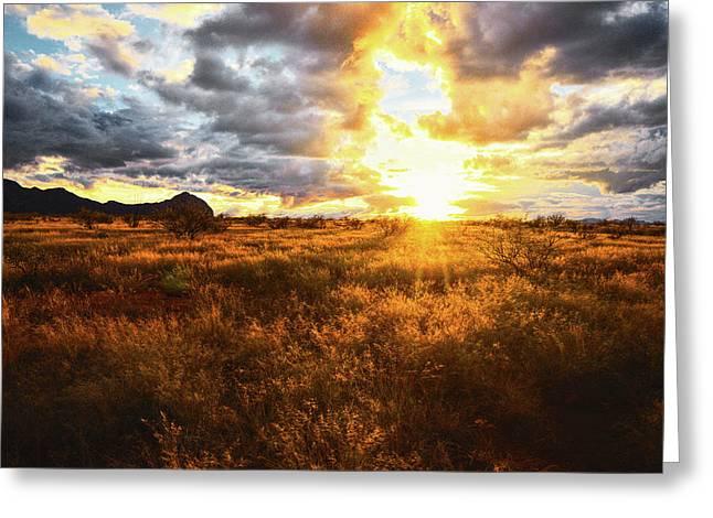 Golden Light Of Southern Arizona Greeting Card
