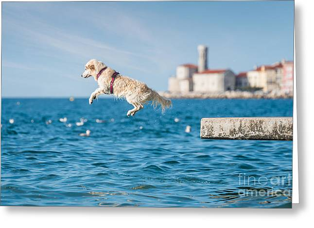 Golden Retriever Dog Jumping Into Sea Greeting Card by Sonsart