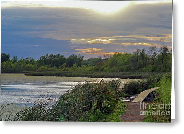 Golden Sunset Over Wetland Greeting Card