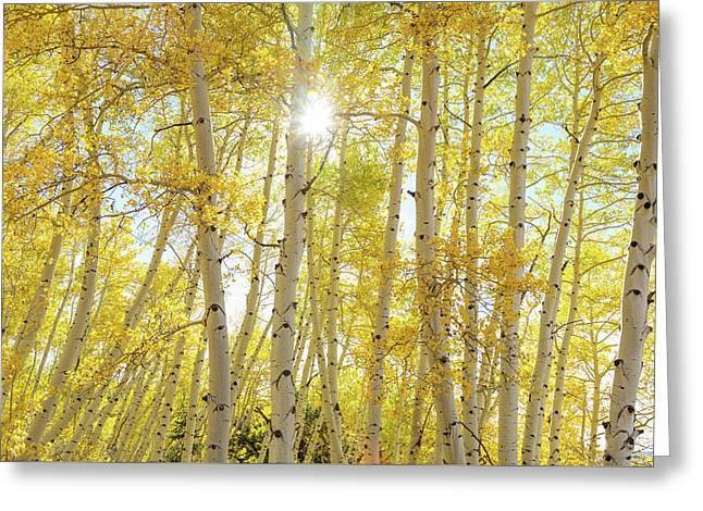 Greeting Card featuring the photograph Golden Sunshine On An Autumn Day by James BO Insogna