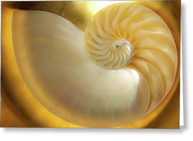 Golden_nautilus_0692 Greeting Card