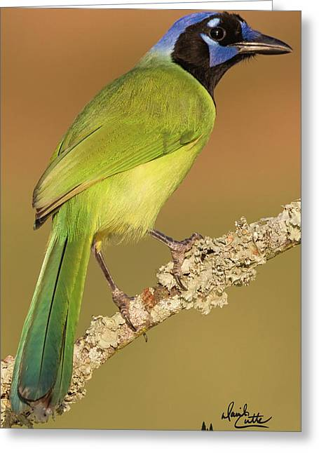 Gorgeous Green Jay Greeting Card