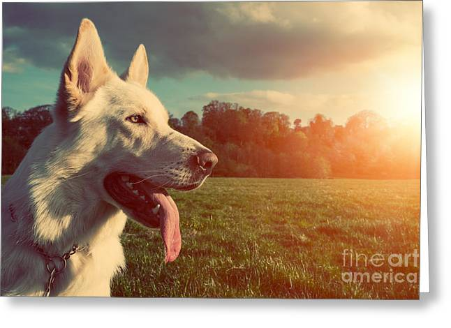 Gorgeous Large White Dog In A Park Greeting Card