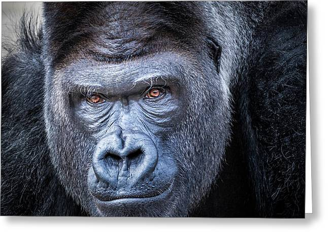 Greeting Card featuring the photograph Gorrilla  by Robert Bellomy
