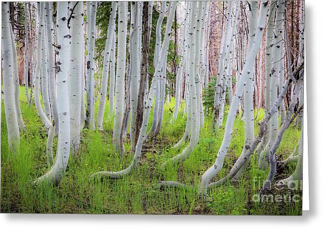 Grand Canyon Birch Trees Greeting Card