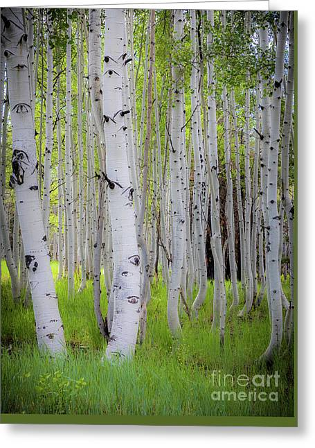 Grand Canyon Birches Greeting Card