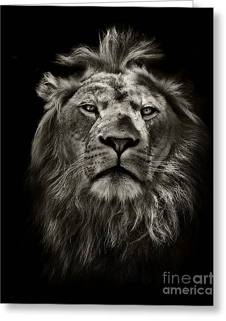 Graphic Black And White Lion Portrait Greeting Card