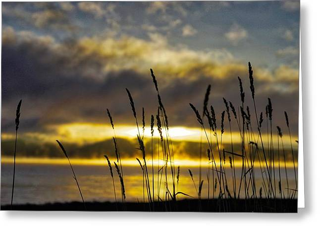Grassy Shoreline Sunrise Greeting Card