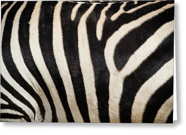 Gray's Zebra Greeting Card