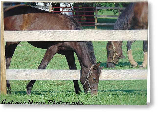 Grazing Beauty Greeting Card