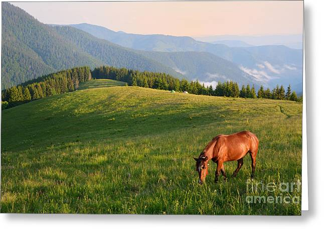 Grazing Horse On Mountain Pasture Greeting Card
