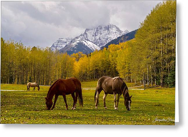 Grazing In Aspen Greeting Card