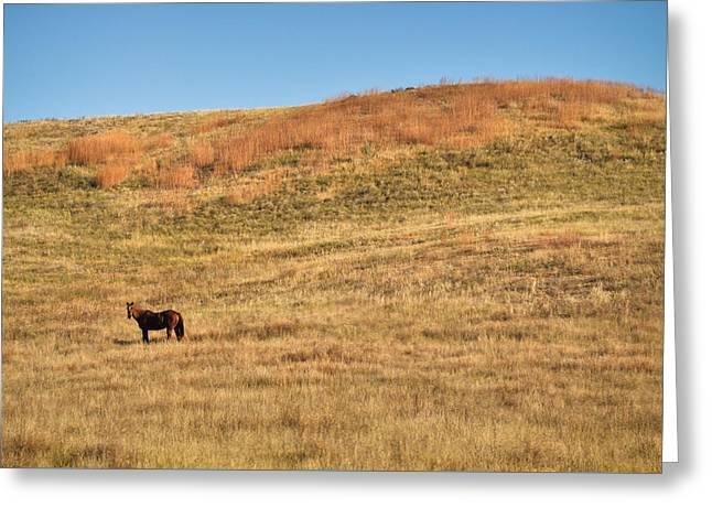 Grazing In The Grass Greeting Card