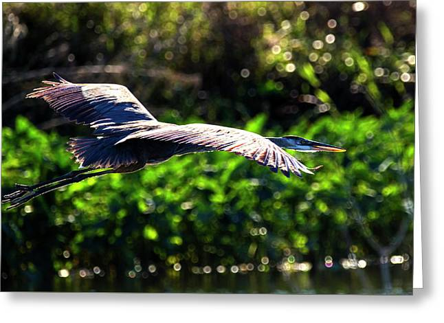Great Blue Escape  Greeting Card