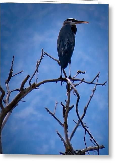 Great Blue Heron 3 Greeting Card
