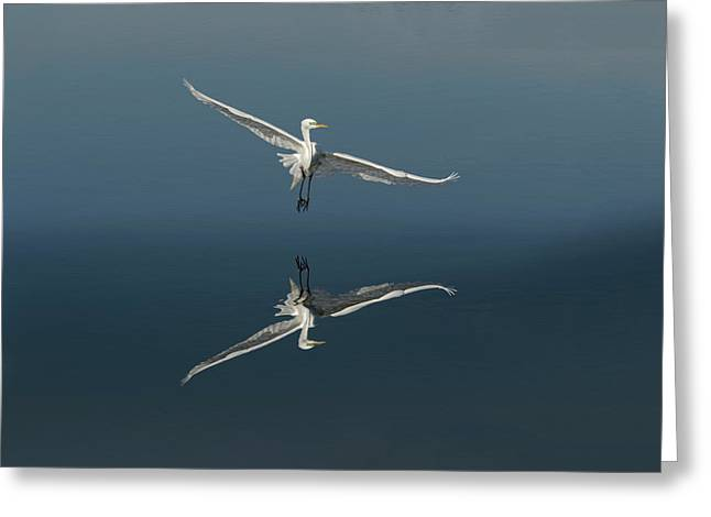Great Egret Flying With Reflection Greeting Card by Adam Jones