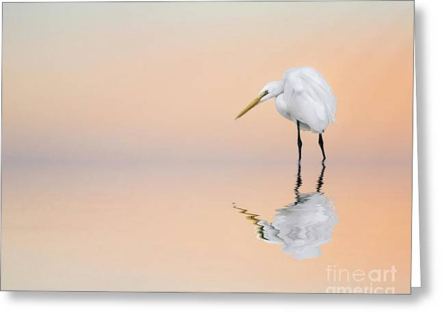 Great Egret Reflecting Greeting Card