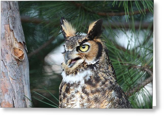 Greeting Card featuring the photograph Great Horned Owl 5151801 by Rick Veldman